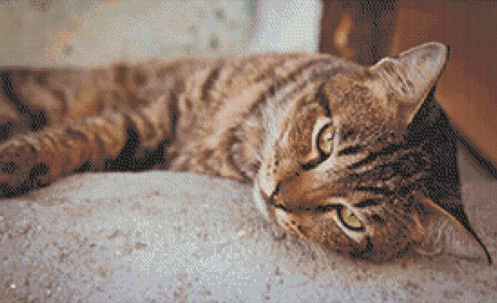 Patrón punto de cruz gato